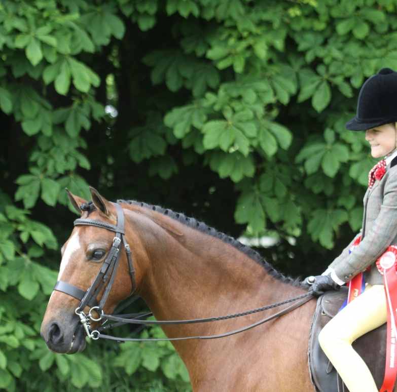 Entrymaster Equine The complete Equine event entry solution